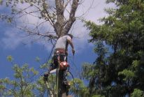 valley tree service, tree trimming, stump removal, emerald ash borer, mn, minnesota, apple valley, burnsville, rosemount, lakeville, prior lake, south metro, twin cities, tree removal, tree diagnosis, tree protection, apple tree